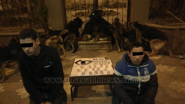 : بالصور.. الكلاب البوليسية تنقذ تاجر مخدرات من قبضة أمن الغربية