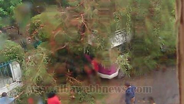 : شلل مروري في الإسكندرية بسبب سقوط شجرة