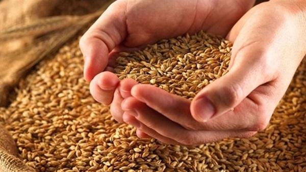 : ننشر حيثيات حكم وقف تنفيذ منع استيراد القمح الروسي