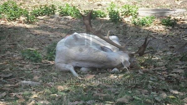 : بالصور.. الحيوانات  مفرهدة  في حديقة الجيزة
