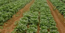 البحوث الاقتصادية: الأسمدة الحيوية تحمي بيئة التربة ولا تضر بالمحصول