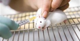 علماء أمريكيون يدرسون نشاط بعض الجينات في الفئران والأسماك