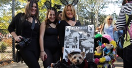 """بالصور.. الكلاب تحتفل بعيد """"الهالوين"""" في نيويورك"""