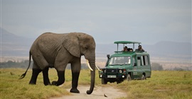 دراسة: أفيال كينيا تسير ليلا وتختبئ نهارا هربا من رصاص الصيادين