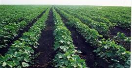 رومانيا تمتلك ثلث عدد المزارع بالاتحاد الأوروبي