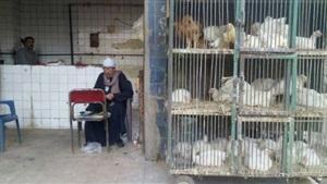 الفرخة في مصر بـورقة