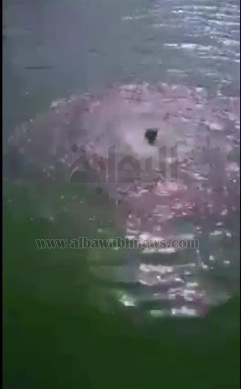 شابان يلقيان طفلا بترعة المحمودية في البحيرة