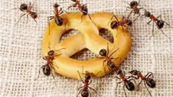 نتيجة بحث الصور عن صور حشرات المنزل الطائرة