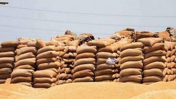 القمح -صورة ارشيفية