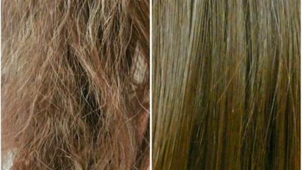 7f5efb026 البوابة نيوز: أسباب وطرق علاج الشعر الجاف بخلطات طبيعية