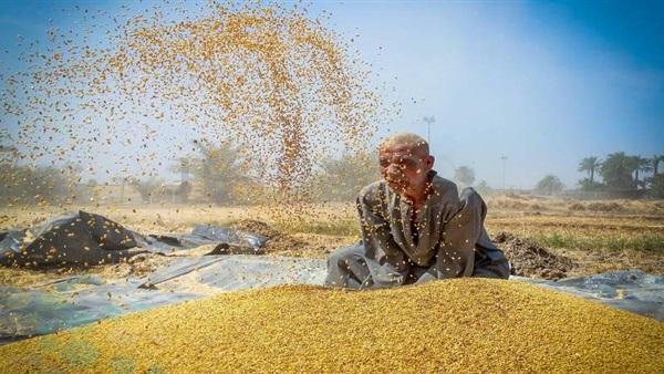<a href='/news-2-1115828.html'>الحكومة تنفي تقليص رقعة الأراضي المزروعة بالقمح</a>