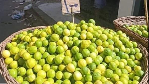 : انفراجة في أزمة الليمون.. هبوط حاد في الأسعار وأمين الفلاحين يتهم تجار الإخوان بافتعال المشكلة