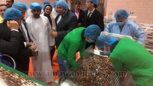 : محافظ الوادي الجديد يكلف بزيادة صادرات منتجات التمور