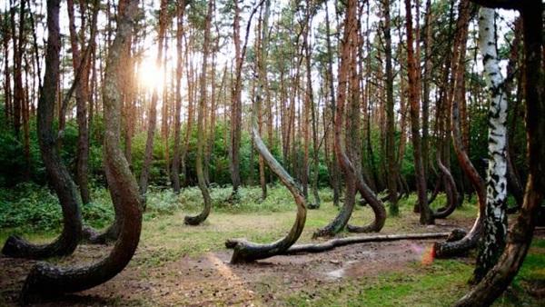 : تعرف على أغرب 3 غابات في العالم