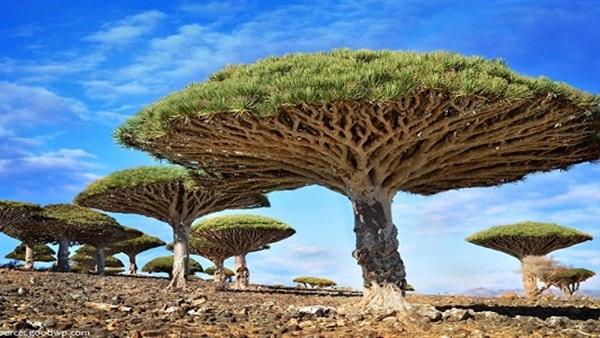 : تعرف على أغرب وأجمل ثلاث غابات في العالم
