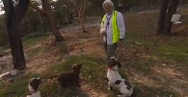حرائق أستراليا تشتعل مجددًا.. «تومى» و«إيما» و«بيكى».. كلاب لإنقاذ «الكوالا»