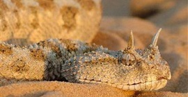 تعرف على أنواع الثعابين المختلفة في مصر